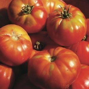 "Tomate Rouge précoce ""altajsky Urozajnij"""