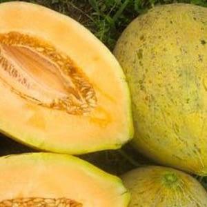 Graines melon Eel River