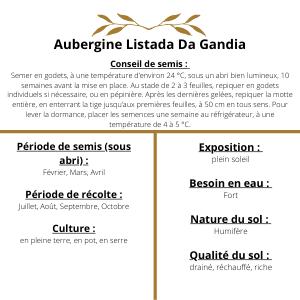 Culture aubergine Listada